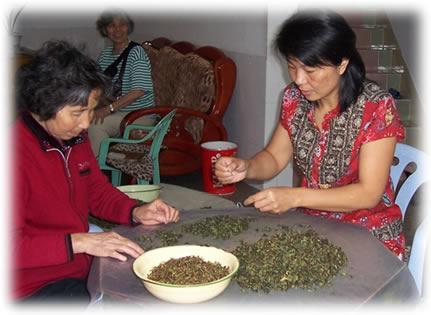 making Tie Guan Yin Oolong tea