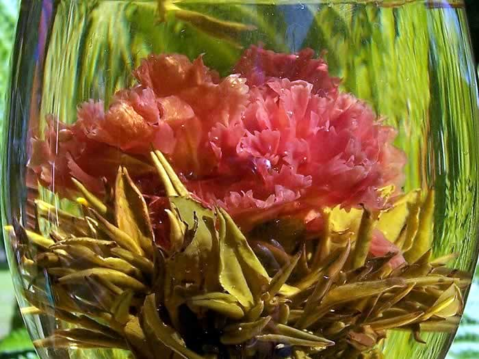 Jasmine green tea carnation flame